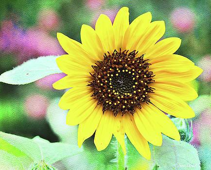 Sunflower by Trina Ansel