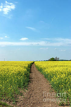 The Path to Bosworth Field by John Edwards
