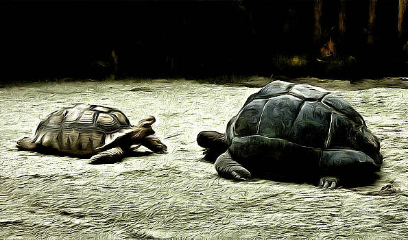 The Showdown by Steve Taylor