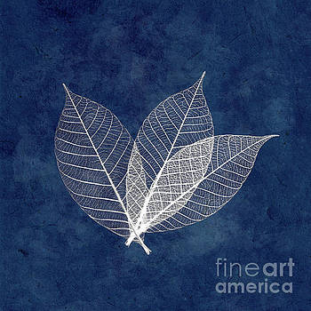 Three white leaves on blue by Delphimages Photo Creations