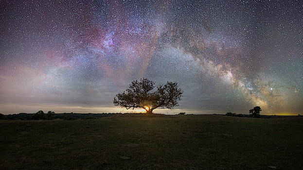 Tree of Light  by Aaron J Groen