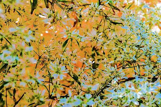 Trees and Leaves  by D Davila