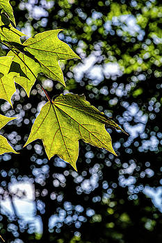 Trees and Leaves by Robert Ullmann