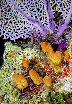 Jean Noren - Underwater Scenic