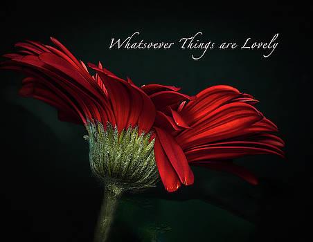 Whatsoever Things are Lovely by Joni Eskridge