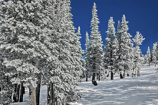 White Forest by Maria Coulson