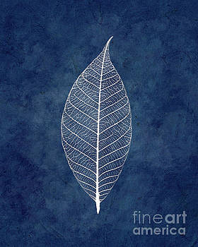 White leave on blue by Delphimages Photo Creations