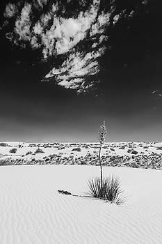 Melanie Viola - White Sands Impression - Monochrome