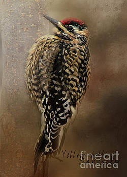 Yellow-bellied Sapsucker by Pam  Holdsworth