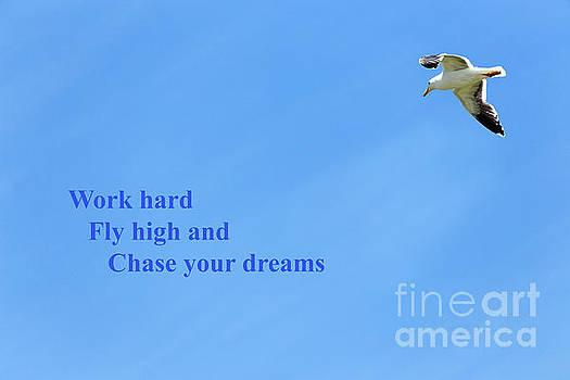 Adult Western gull seagull flying gliding soaring by Robert C Paulson Jr