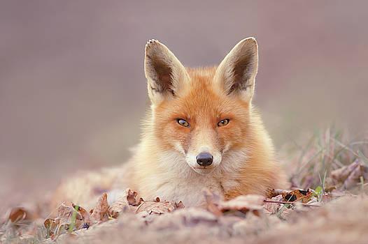 Autumn Fox by Roeselien Raimond