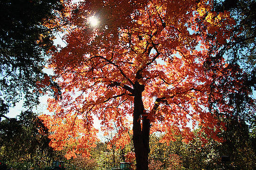Autumn Splendor by Ellen Tully