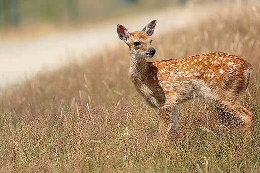Bambi by Heike Hultsch
