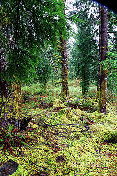 Conifer forest understory close up yellow green moss covering gr by Robert C Paulson Jr