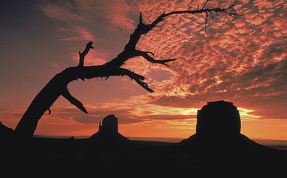 Dead tree in Monument Valley by Carl Purcell