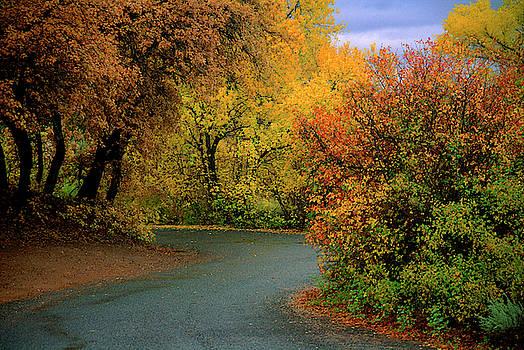 Fall Road, Utah by Lee Craker