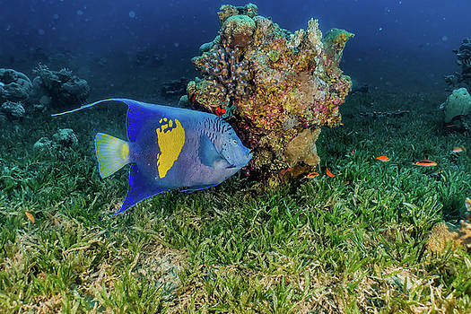 Fish swim in the Red Sea, colorful fish by Avner Efrati