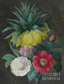 Pierre-Joseph Redoute - Four Peonies and a Crown Imperial