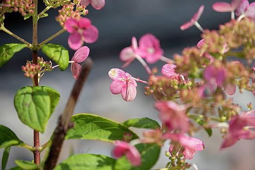 Little Pink Flowers by David Stasiak