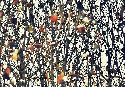 Nature abstraction by Marija Djedovic