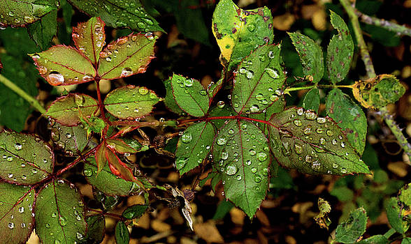 Rain Out by Dennis Dugan