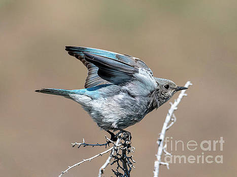 Ready to Fly by Mike Dawson