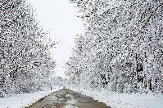 Snowy Landscape by Terri Morris