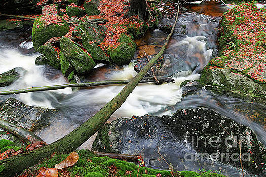 Stream in the autumn forest by Michal Boubin