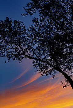 Sunset Clouds Sky and Trees by Robert Ullmann