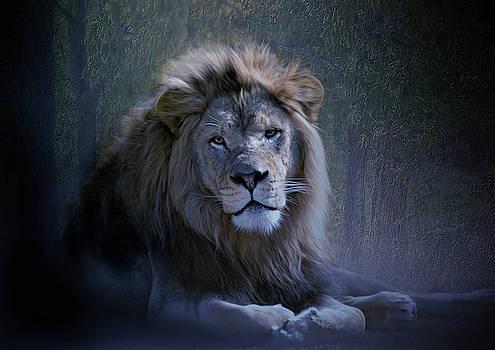 TAfrican Lion  by Savannah Gibbs