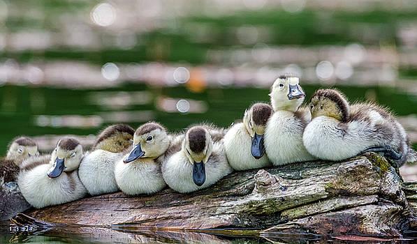 USA, Oregon, Hosmer Lake, Deschutes by Mark Williford