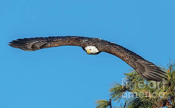 Wingspan by Mike Dawson