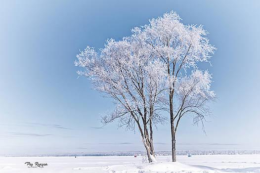Winter White by Peg Runyan