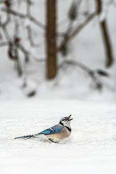 2019 First Snow Fall by Cindy Lark Hartman