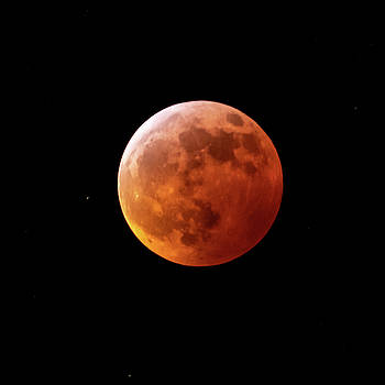 2019 Lunar Eclipse by Nick Noble