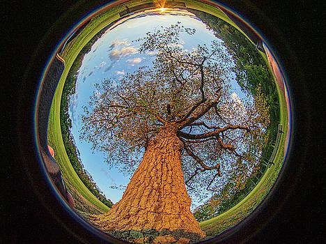Louis Dallara - 210 degree Mount Laurel Tree