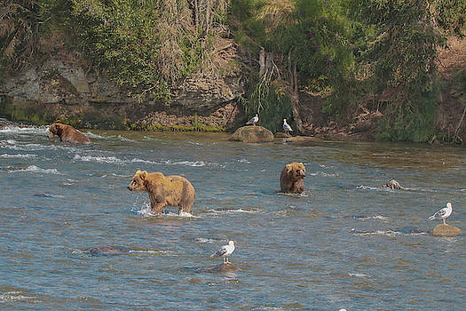 3 Brown Bears by Lisa Bell