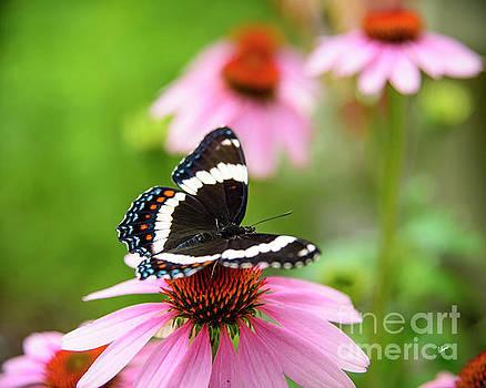 Butterfly by Alana Ranney