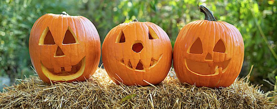 3 Carved Pumpkins by Steve Gadomski