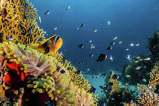 Coral reefs and water plants in the Red Sea by Avner Efrati