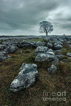 Mariusz Talarek - Lonely tree in Malham