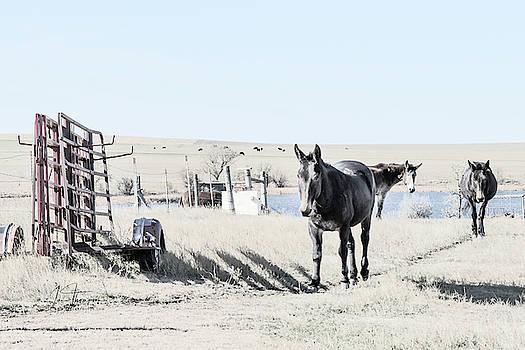 3 Mules by Jim Thompson