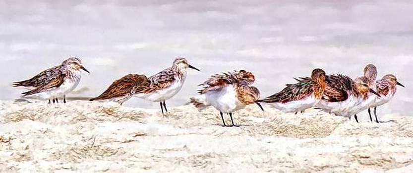 Paulette Thomas - Shore Birds