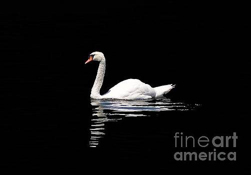 Swan by Stacey Brooks