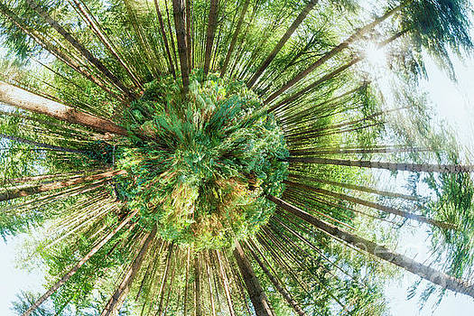 Simon Bratt Photography LRPS - 360 degree of a pine woodland