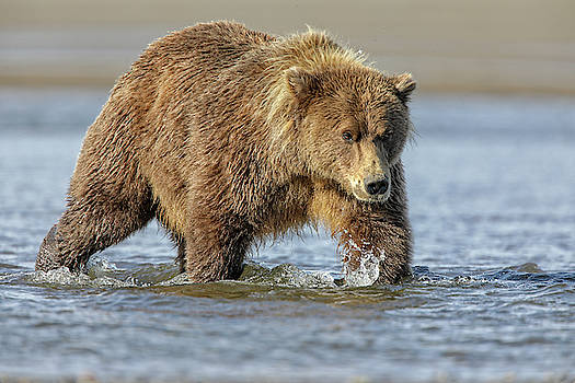 Coming In by Leigh Lofgren