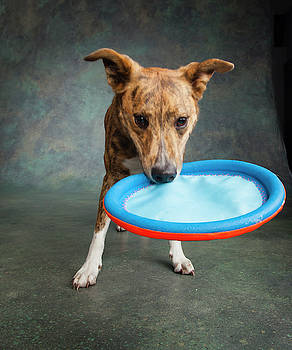 Portrait Of A Greyhound Collie Mix Dog by Panoramic Images
