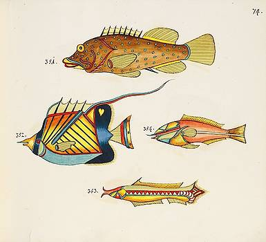 Tropical Fishes of the East Indies by MotionAge Designs
