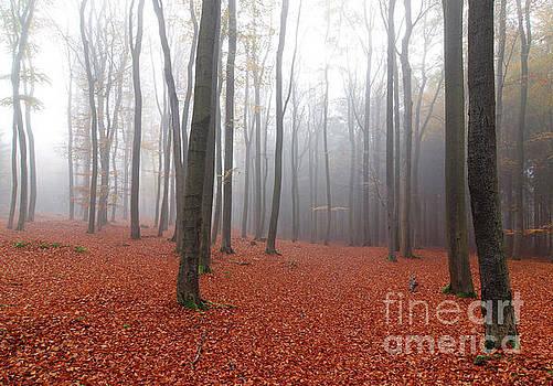 Beech forest in autumn by Michal Boubin