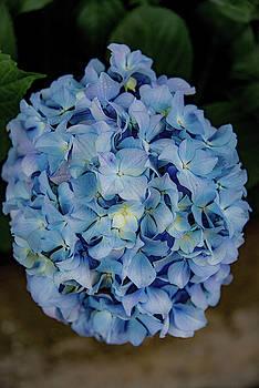 Blue by Joseph Yarbrough